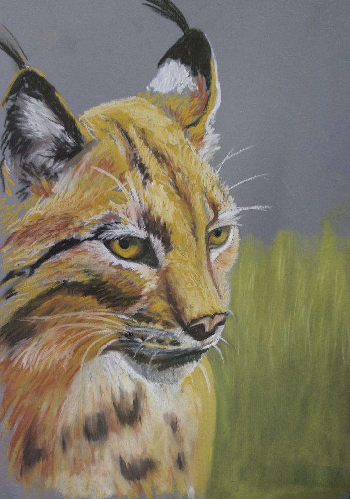 Oil pastel painting of a lynx by Maiju Vigrén