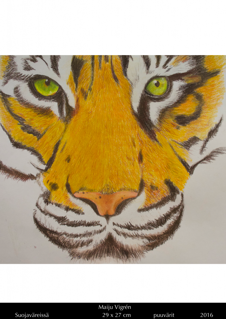 A wood pencil drawing of a tiger by Maiju Vigrén